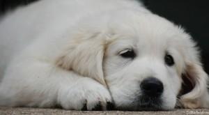 BeFunky_dogs 021.jpg